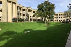 Maintenance - Grass