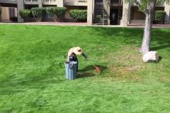 Maintenance - clean grass area